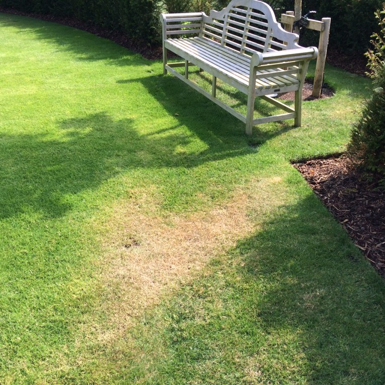 Lawn Dry Patch by Bench