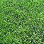 Lawn Care for Bermuda Grass in Vero Beach