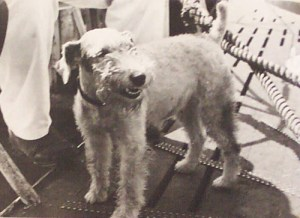 Lemp's dog Schnürzel. Schnürzel was a familiar sight at the naval docks and was sadly missing in action after jumping aboard a departing destroyer that was subsequently sunk.