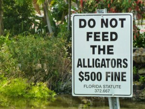 Is the citation to that alligator law in correct Bluebook format? Photo credit: M. Ciavardini