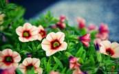 nice-flower-bokeh-2880x1800