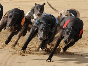 Laying Greyhounds on Betfair