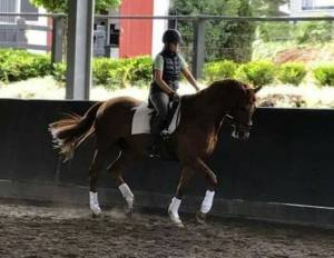 Hannah riding in a clinic with Jose Mendez Lyme disease free!