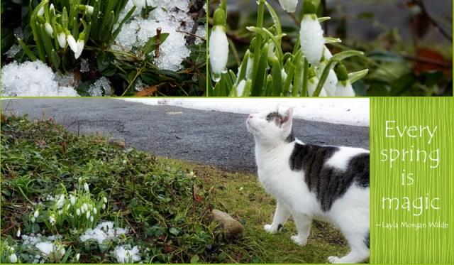Spring snowdrop magic quote
