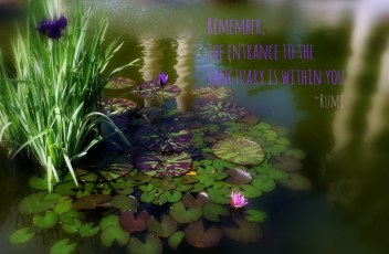 waterlilies pond quotes Rumi