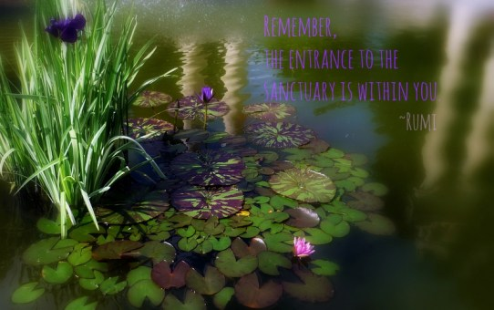Persian Garden Inspiration By Rumi