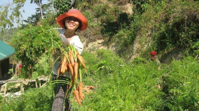 carrots and volunteers