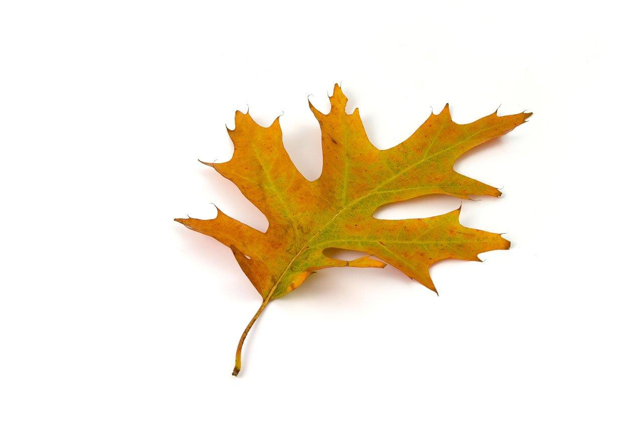 oak-1742.jpg?zoom=2&resize=705%2C470