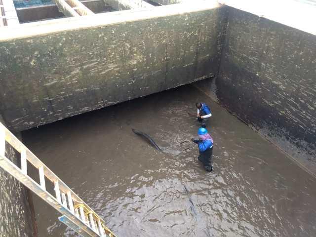 Gobierno de Morelia realiza trabajos de mantenimiento en planta potabilizadora Mintzita