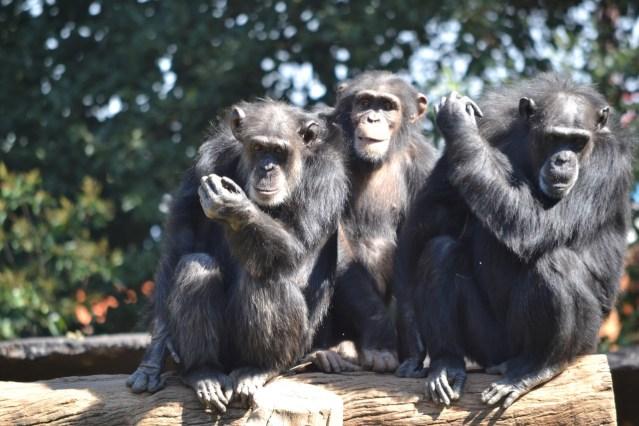 Mantiene Zoológico de Morelia sus puertas cerradas por el COVID-19