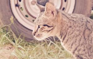 Voitures et chats