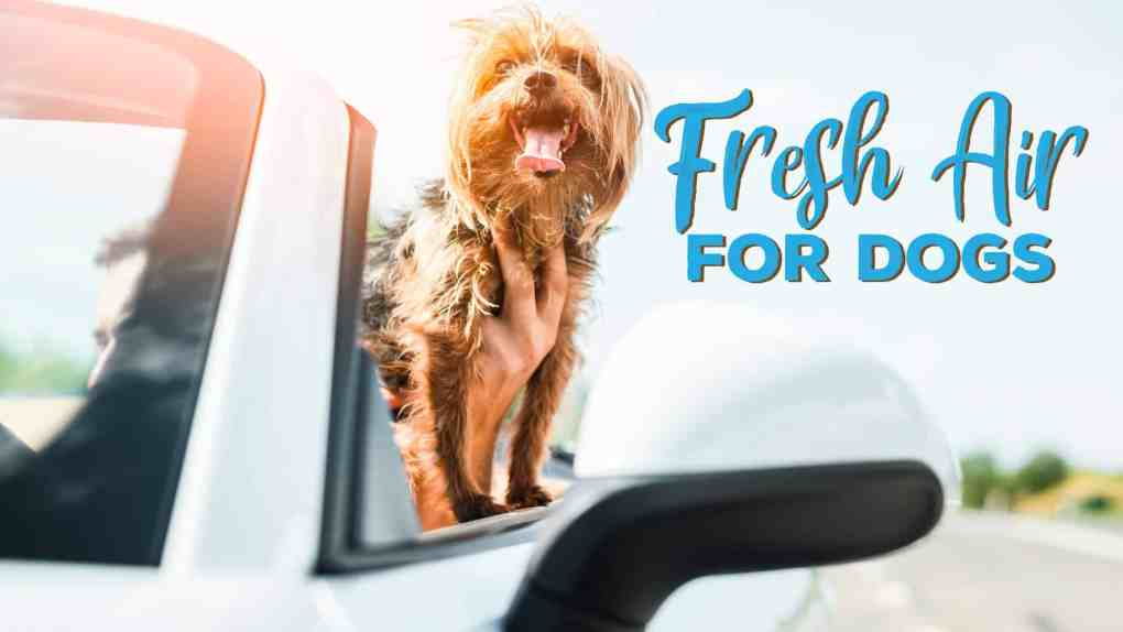 Fresh Air Is Important For Our Dog, Cats And Pets!