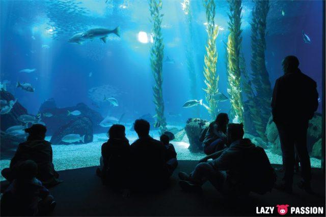 Lisbon 2018 Oceanário
