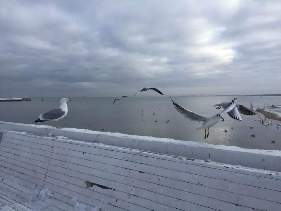 sopot-ptaki