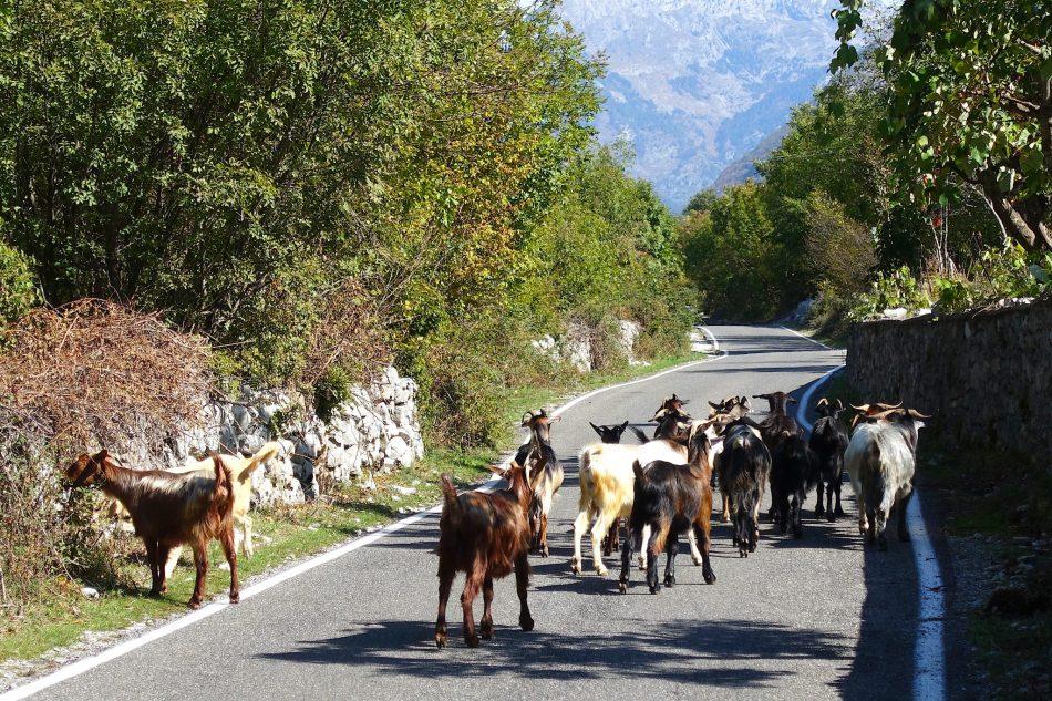 kozy na ulicy 2