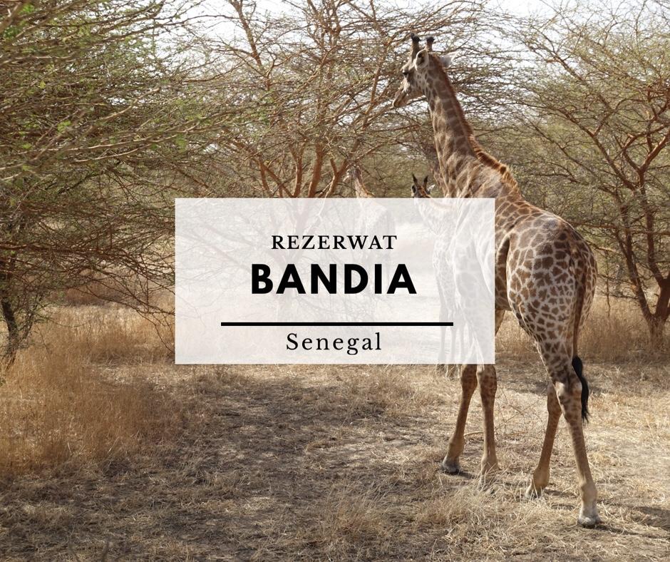 Rezerwat Bandia - safari wśród zwierząt