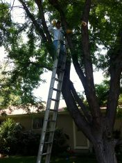 Head groundskeeper tackles the tree trimming