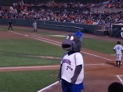 Ironbirds' mascot, Ferrous, poses on top of opponents dugout for young fans.