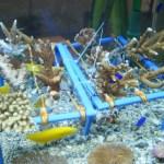 PCAARRD helps restore coral reef