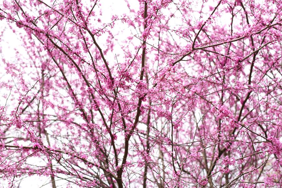 Chapel Hill spring