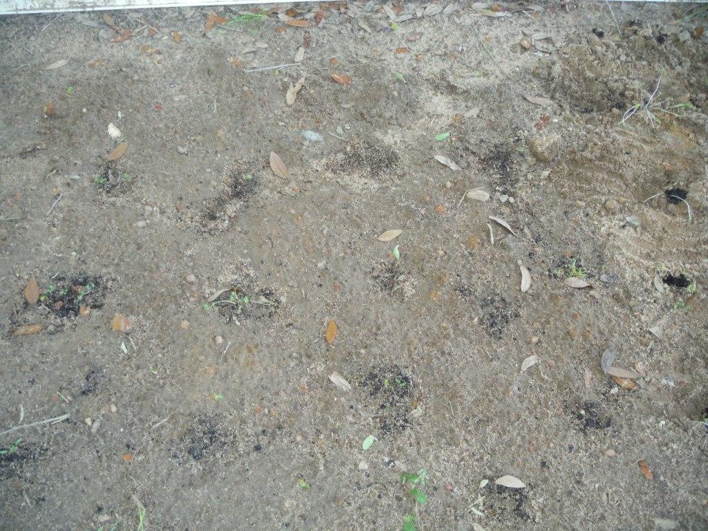 My Garden! #JaysSeeds #HomeGrown #FreshFood #LCHF