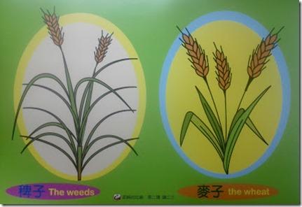 稗子與麥子