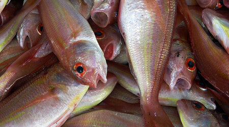 मछली इमल्शन उर्वरक-पौधों के लिए
