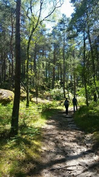 Les bois de Fontainebleau