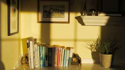 shelf with books and potted flower in room