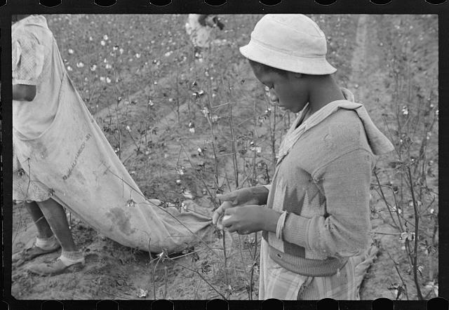 Young cotton picker, Pulaski County, Arkansas. Schools for colored children do not open until January 1st so as not to interfere with cotton picking