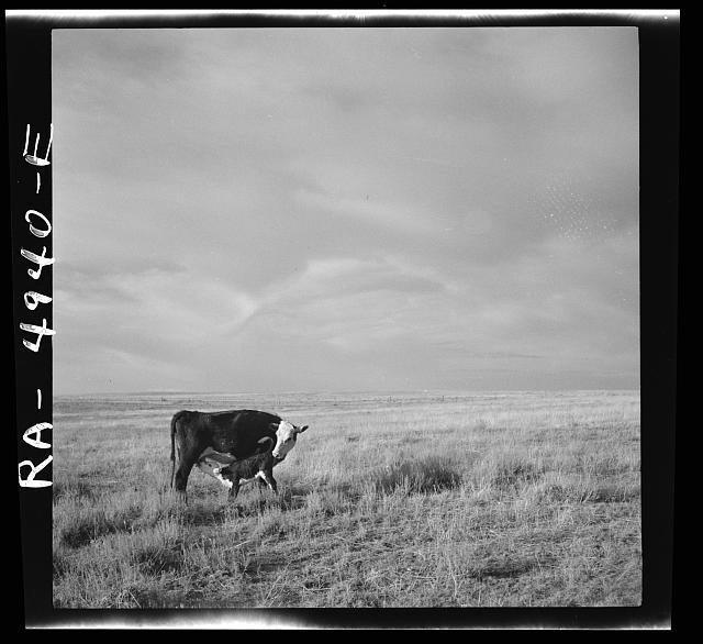 Grazing land. Madras, Oregon