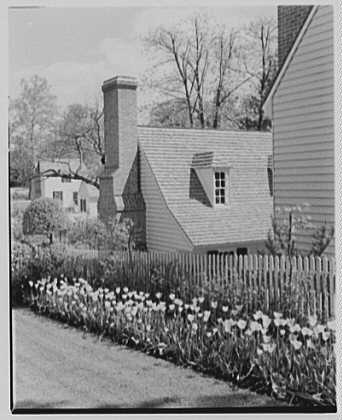 Williamsburg, Virginia. Garden with yellow tulips II, against print shop