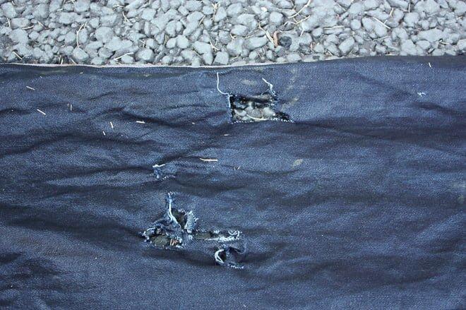 # Zoo Jeans 讓老虎、獅子當設計師:這才是真正的獸爪牛仔褲! 19