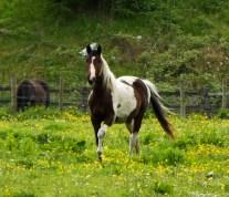 horse21