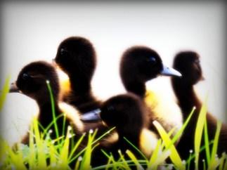 ldpfotoblog_birds july003