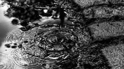 water_drop_ldpfotoblog_bweb