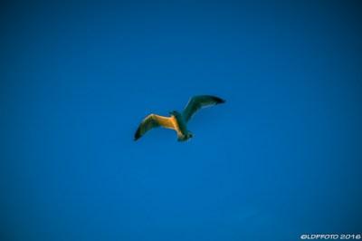 blackpool_seagull_sundown_ldpfotoblog