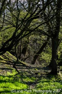 nature_lucaspuchphoto_web-26