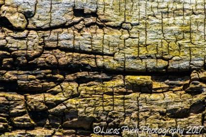 Old tree bark_lucaspuch_web-3