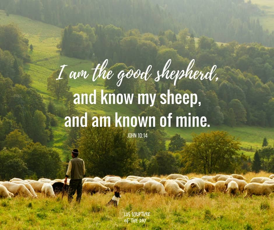 I am the good shepherd, and know my sheep, and am known of mine. John 10:14