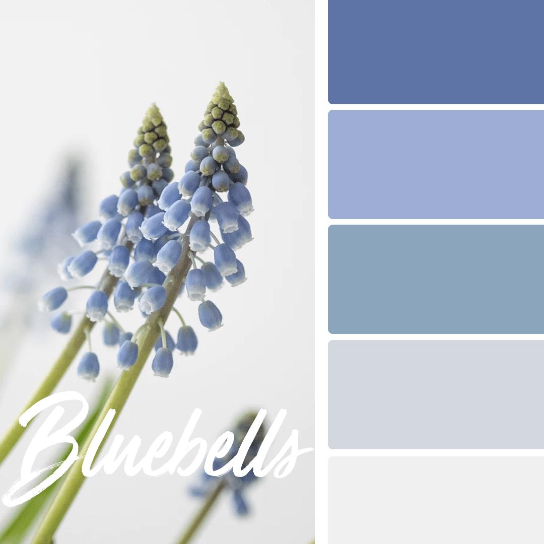 bluebells-spring-wedding-colors