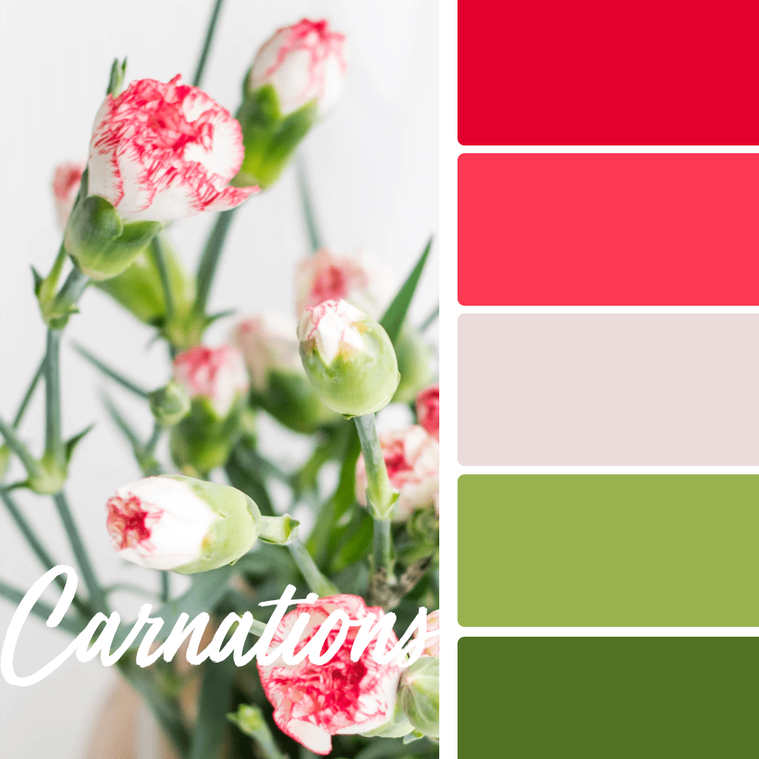 carnations-spring-wedding-colors