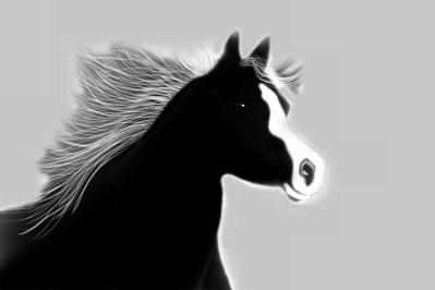 black stallion4 (1280x854)