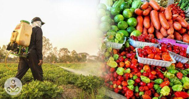 Résidus de Pesticides dans l'alimentation - Traces de simplisme dans l'information