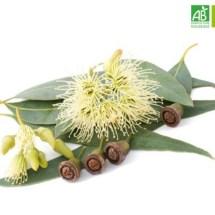 Huile Essentielle d'Eucalyptus citronné bio (10 ml) - Abiessence