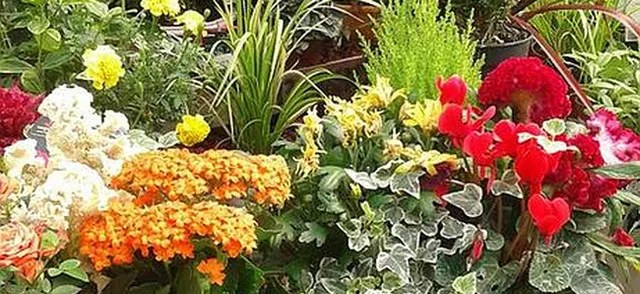 magasin vert magasin jardinerie situe