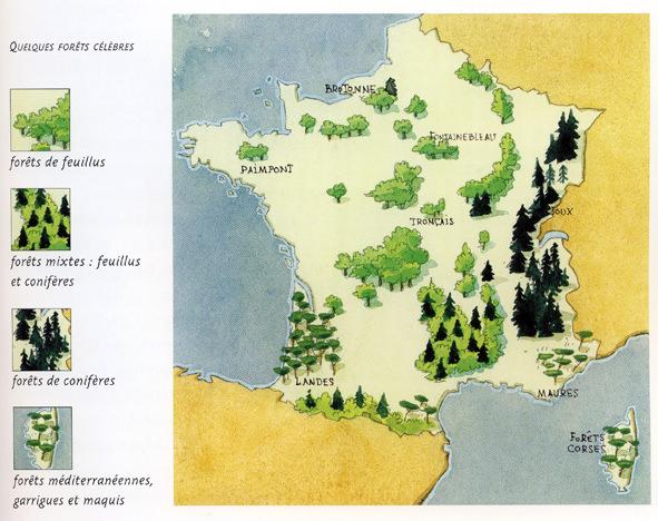 Forets-de-France-Massif-forestier-Foret-domaniale-ONF-office-nationale-des-forets-arboretum-feuillus-coniferes-garrigues-et-maquis-3.