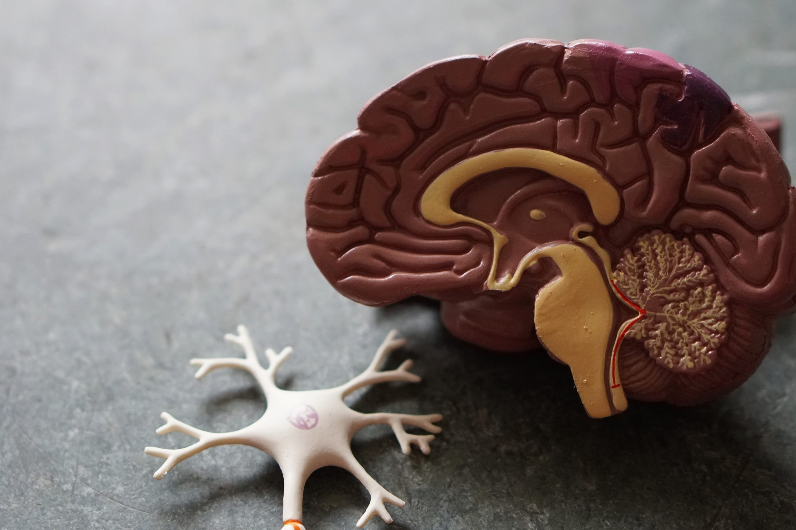 Neuralink : des puces intelligentes pour soigner les lésions neurologiques