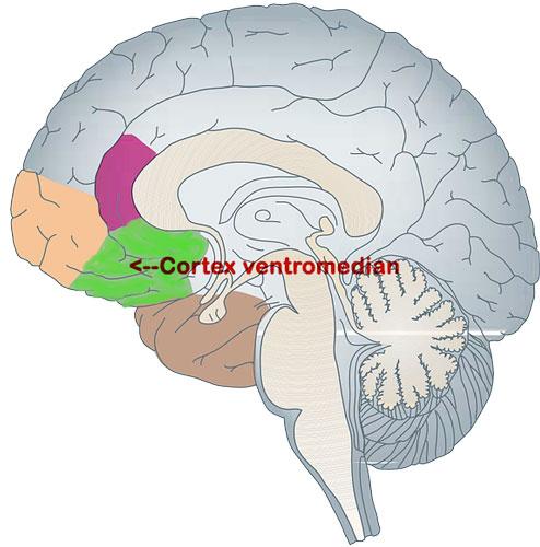 influence de la nature sur le cerveau