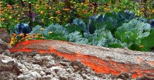 volcan et jardin